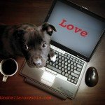 Innamorarsi su internet?