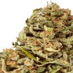 Amnésia la marijuana che sà di eroina