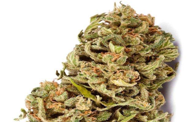 Amnésia marijuana
