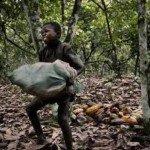 Nestle' dice basta al lavoro minorile nelle piantagioni di cacao