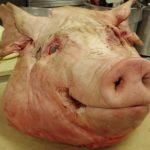 Video shock in un allevamento di maiali, maltrattati per Walmart