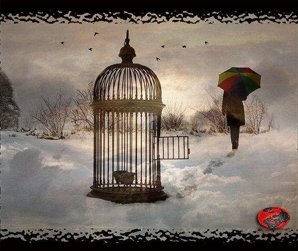 Domenica In Poesia L 39 Uccello Prigioniero