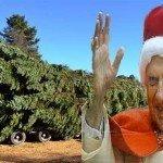 L'albero di Natale fuorilegge del Papa