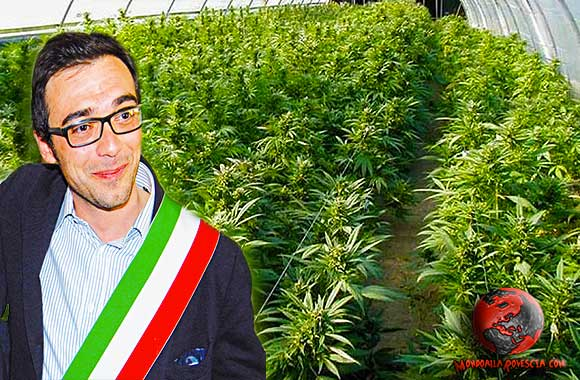 Donato-Metallo-cannabis-marijuana