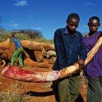 Combattere il traffico illegale di piante ed animali selvatici