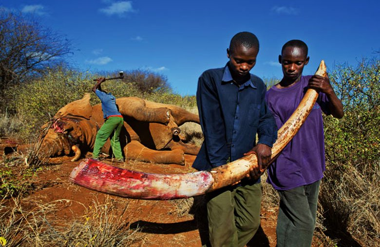 traffico illegale-piante -animali selvatici