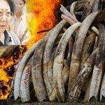 Tanzania: Arrestata la regina dell'avorio, in 14 anni ha ucciso 350 elefanti