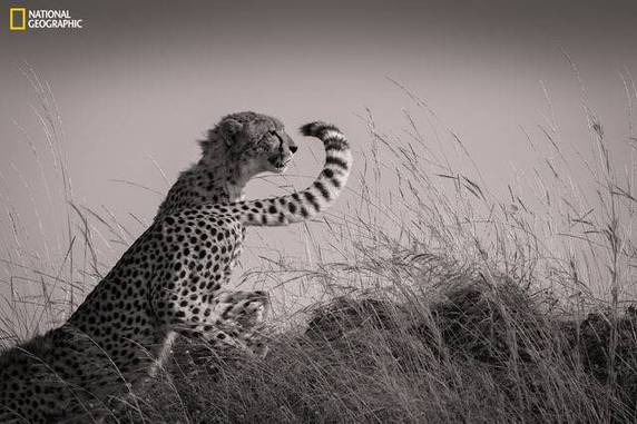 "Mohammed Yousef, ""Changing Shifts"", Masai Mara, Rift Valley, Kenya"