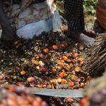 Olio di palma: Ecco perché è tossico