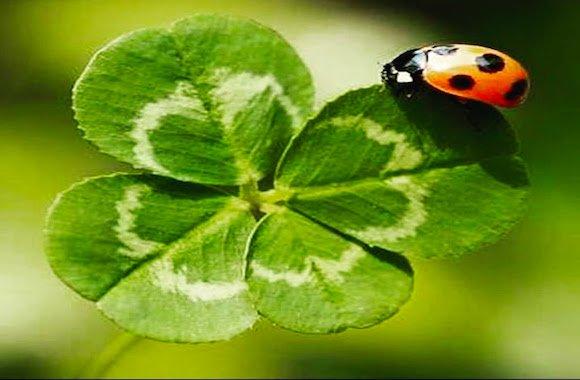 Una poesia portafortuna - Pomo porta fortuna ...