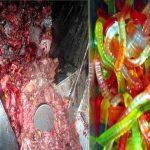 Resti di animali morti che diventano caramelle gommose