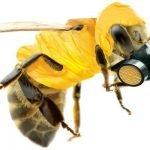 I neonicotinoidi, il killer delle api