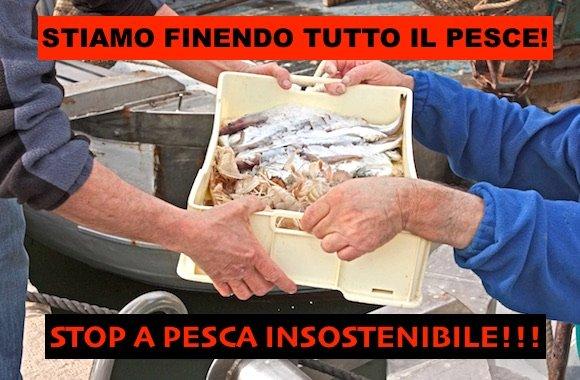 Stop pesca insostenibile