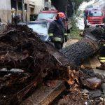 Perché gli alberi cadono? Ecco le principali cause