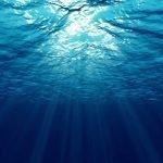 L'acidificazione degli oceani sta uccidendo l'ecosistema marino