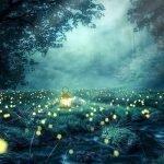 La scomparsa delle lucciole, perché non ci sono più?