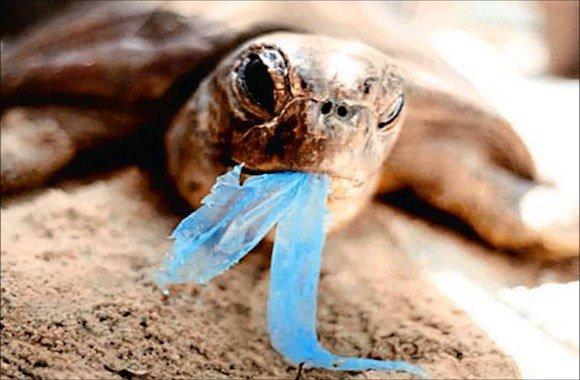 Tartaruga con plastica in bocca