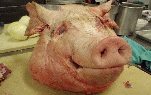 allevamento di maiali, maltrattati per Walmart