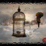 Domenica in Poesia: L'uccello prigioniero