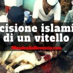Video: Uccisione islamica di un vitello