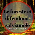 L'importanza e la bellezza delle foreste
