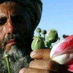 La guerra all'oppio in Afghanistan: 131 morti da marzo