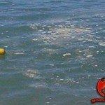 Mar Ligure inquinato: Fuorilegge undici campionamenti su ventitré