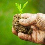 Agricoltura un anno di crisi. Regge l'export e il made in Italy