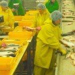Dieci ragioni per non mangiare il salmone