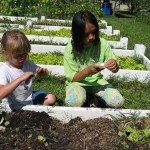 Agrihoods: Gli orti comunitari degli Stati Uniti