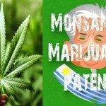 Uruguay: L'ombra di Monsanto nel business della marijuana libera