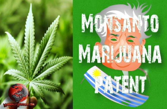 Monsanto-marijuana-José-Mujica