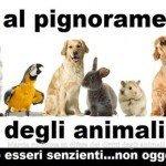 No al pignoramento degli animali domestici #giulezampe
