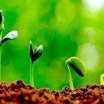 I microrganismi effettivi (EM) per difendere la nostra Terra