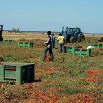 Gli invisibili dell'arancia e lo sfruttamento in agricoltura