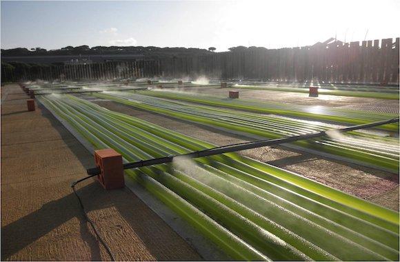 Impianto-produzione-alghe