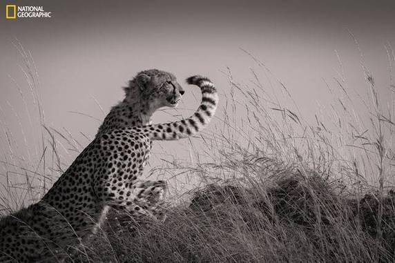 """Mohammed Yousef, """"Changing Shifts"""", Masai Mara, Rift Valley, Kenya"""