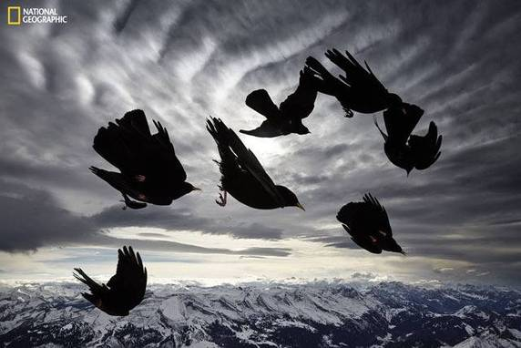 "Alessandra Meniconzi, ""Acrobat of the Air"""
