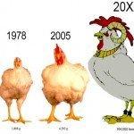 Le mezze verità dell'industria sui polli italiani