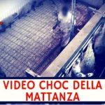 La macellazione choc degli agnelli: Ecco cosa succede in un macello italiano