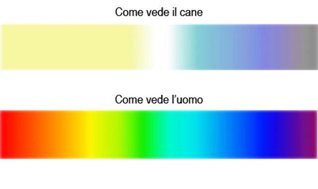 come vedono i colori i cani