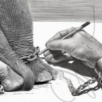 La Storia dell'Elefante Incatenato: Volere è potere… sempre!