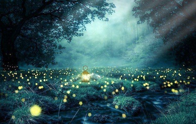 scomparsa delle lucciole